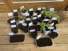 Lunice, mladi vrtnarji